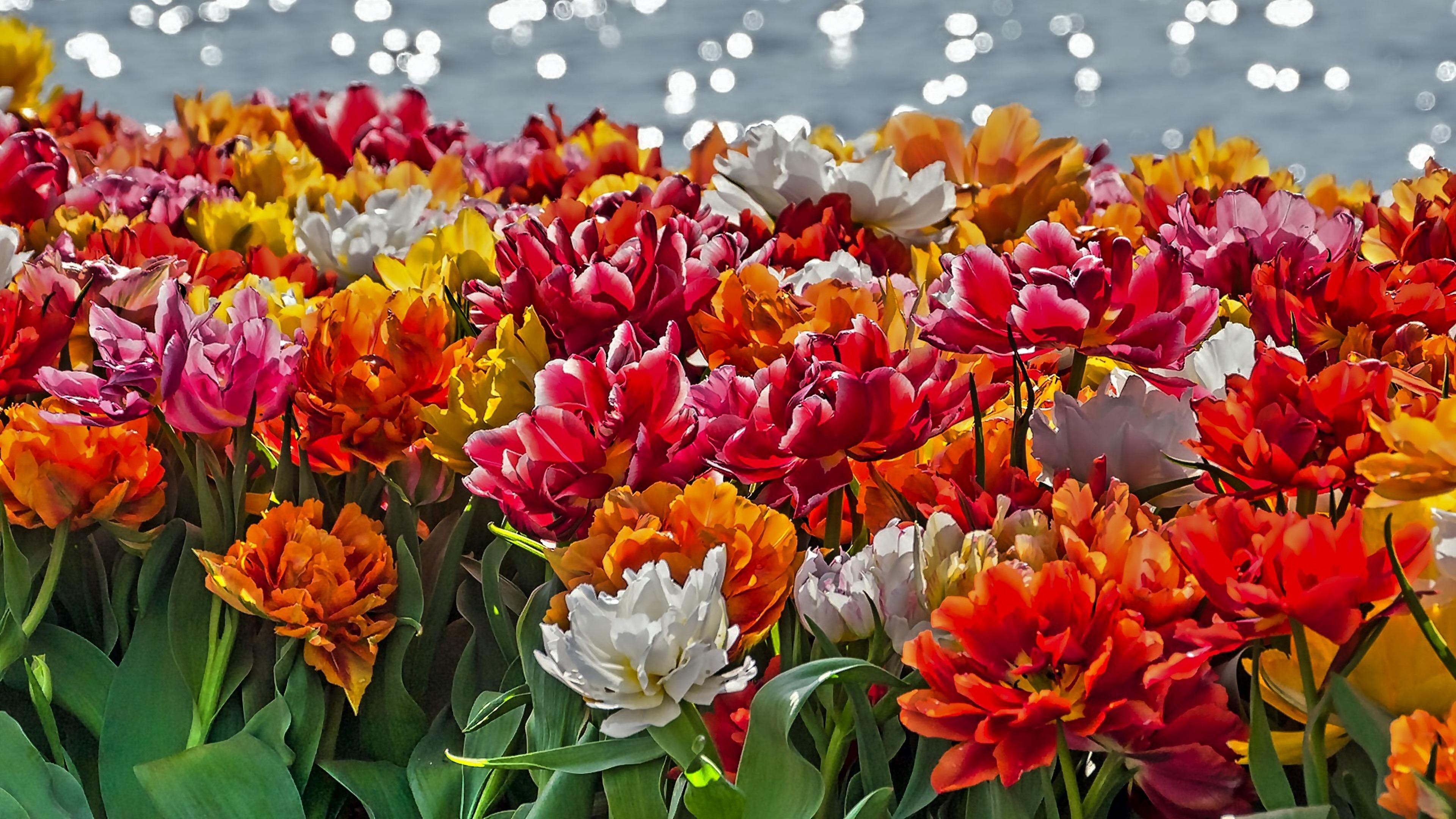 4k wallpaper frühlingsblumen 3840x2160