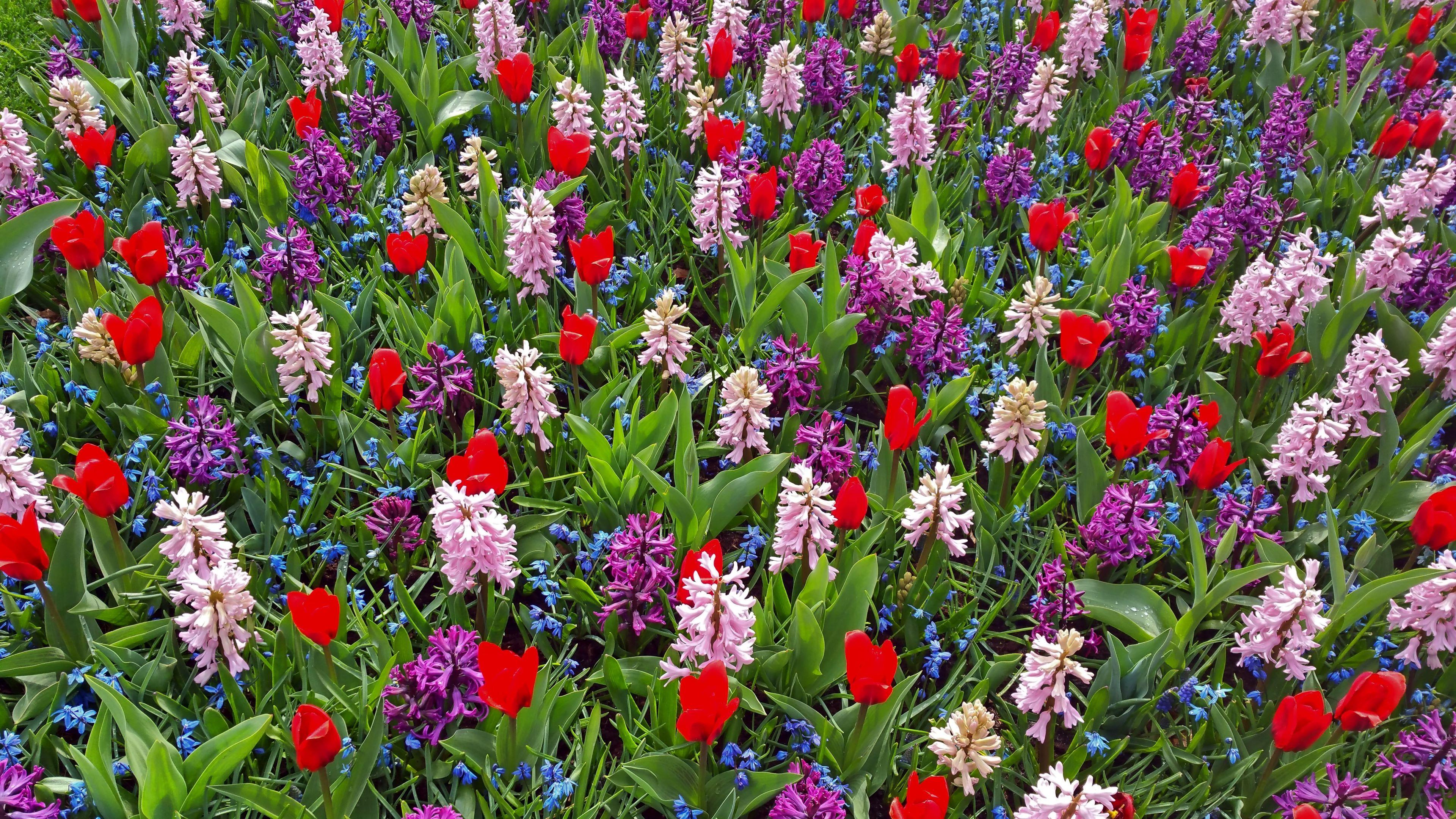 Hintergrundbilder Frühlingsblumen Gratis