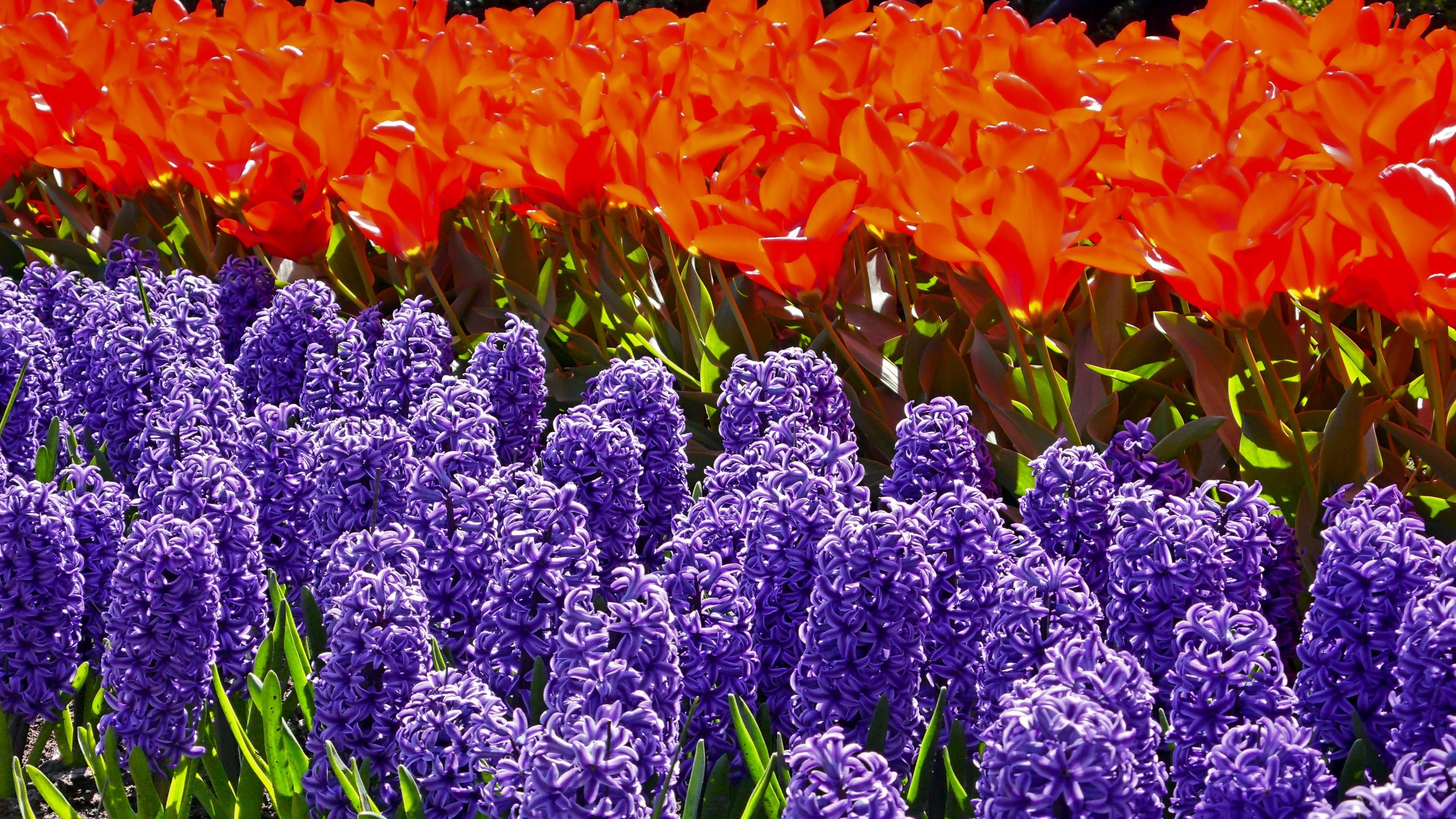hintergrundbilder frühlingsblumen kostenlos