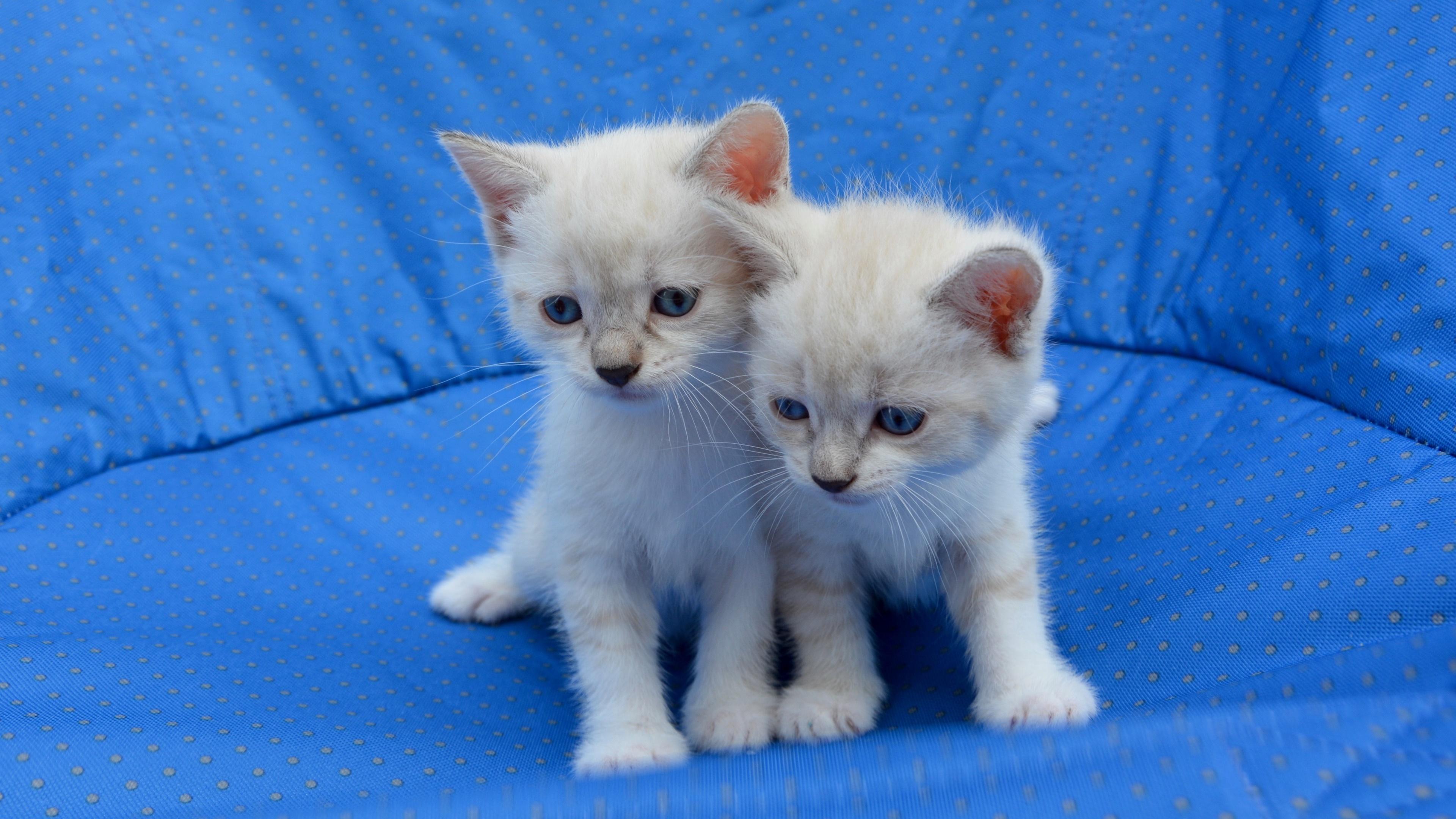 hintergrundbilder katzenbabys