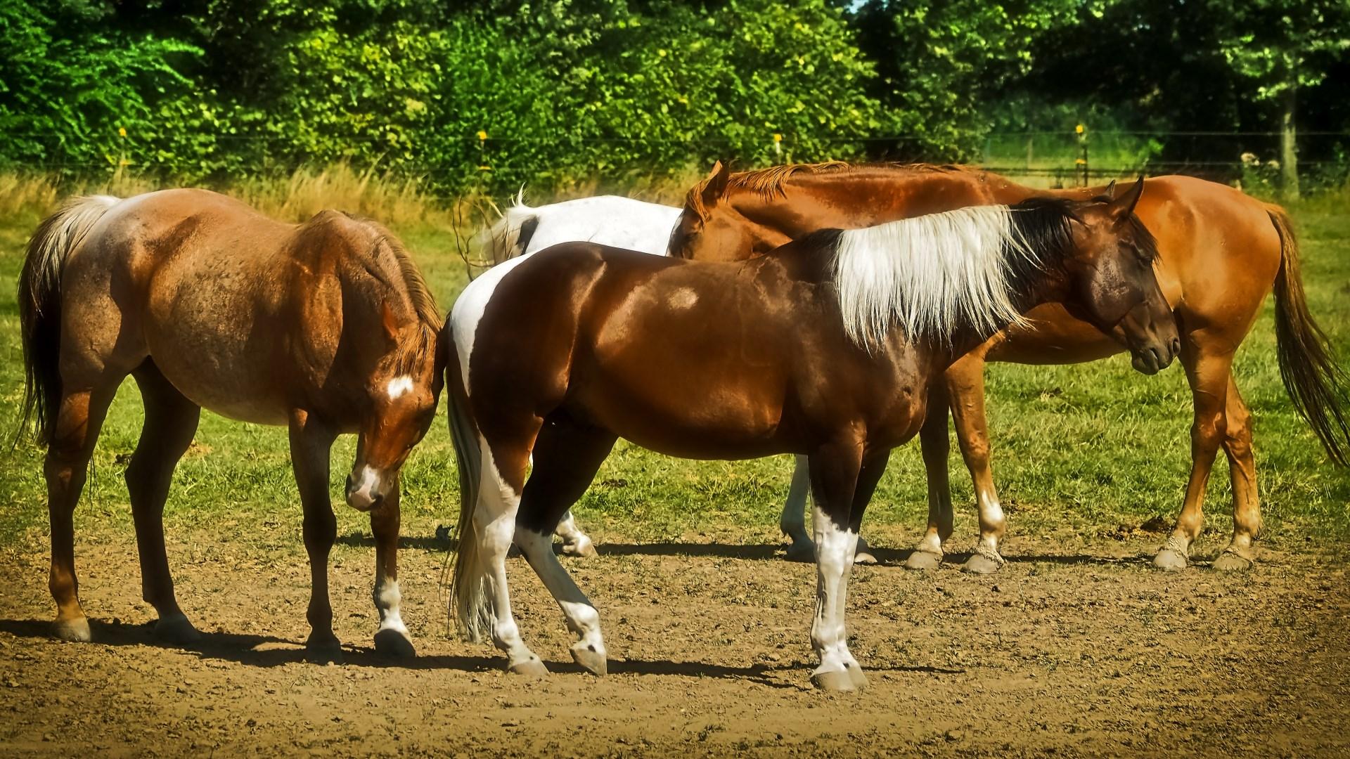 Kostenlose Pferde
