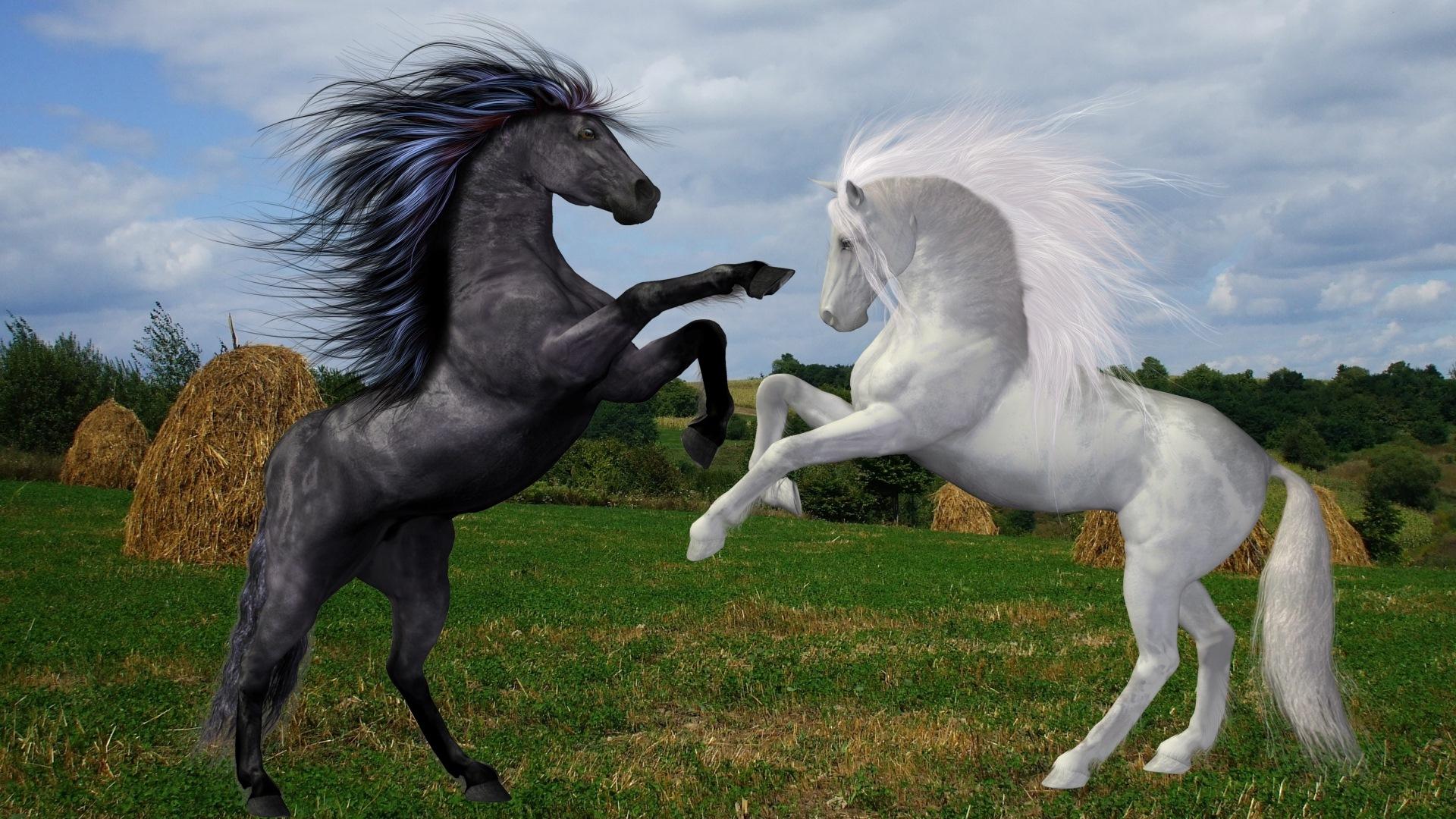 Hintergrundbilder Pferde Fotomontage