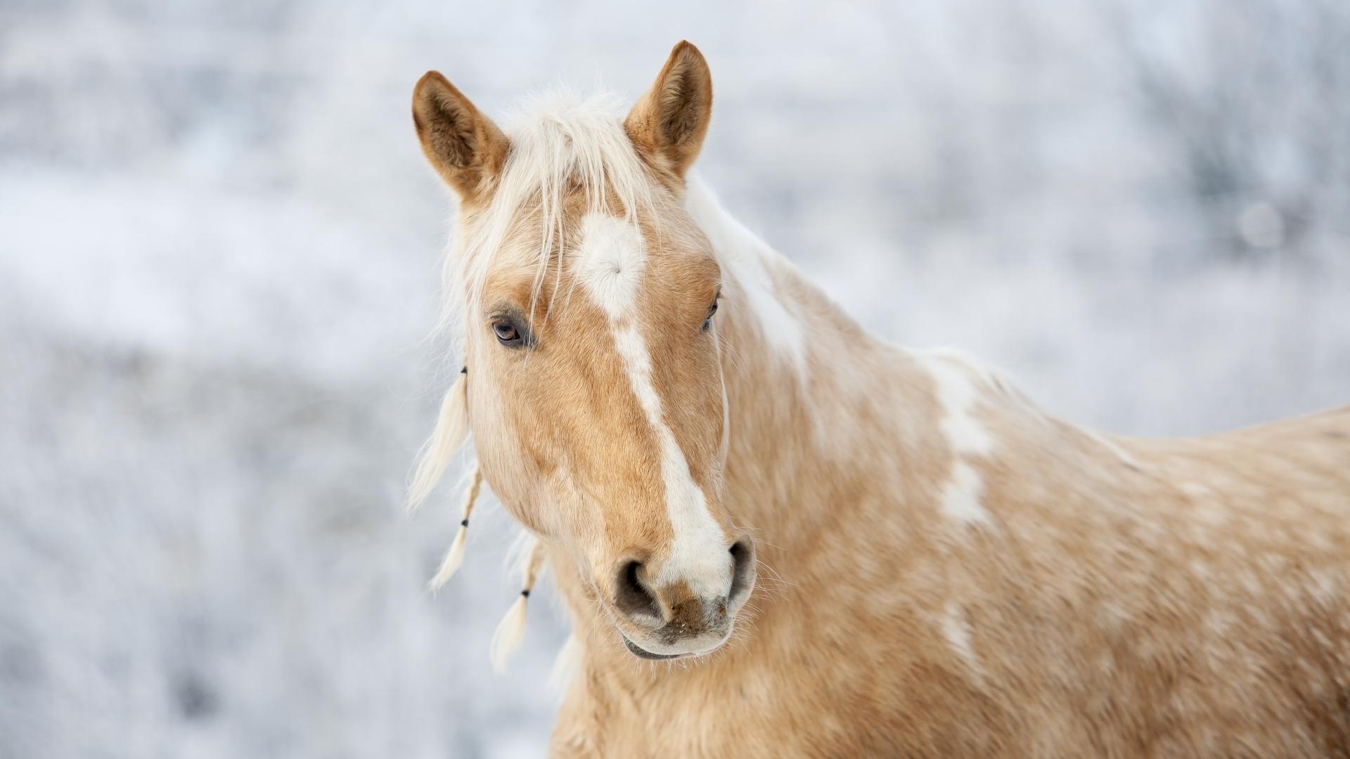 Wallpaper Pferde