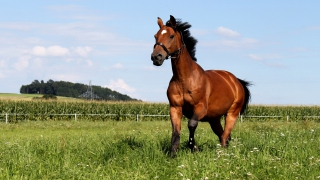 Pferde Bilder Kostenlos 4k