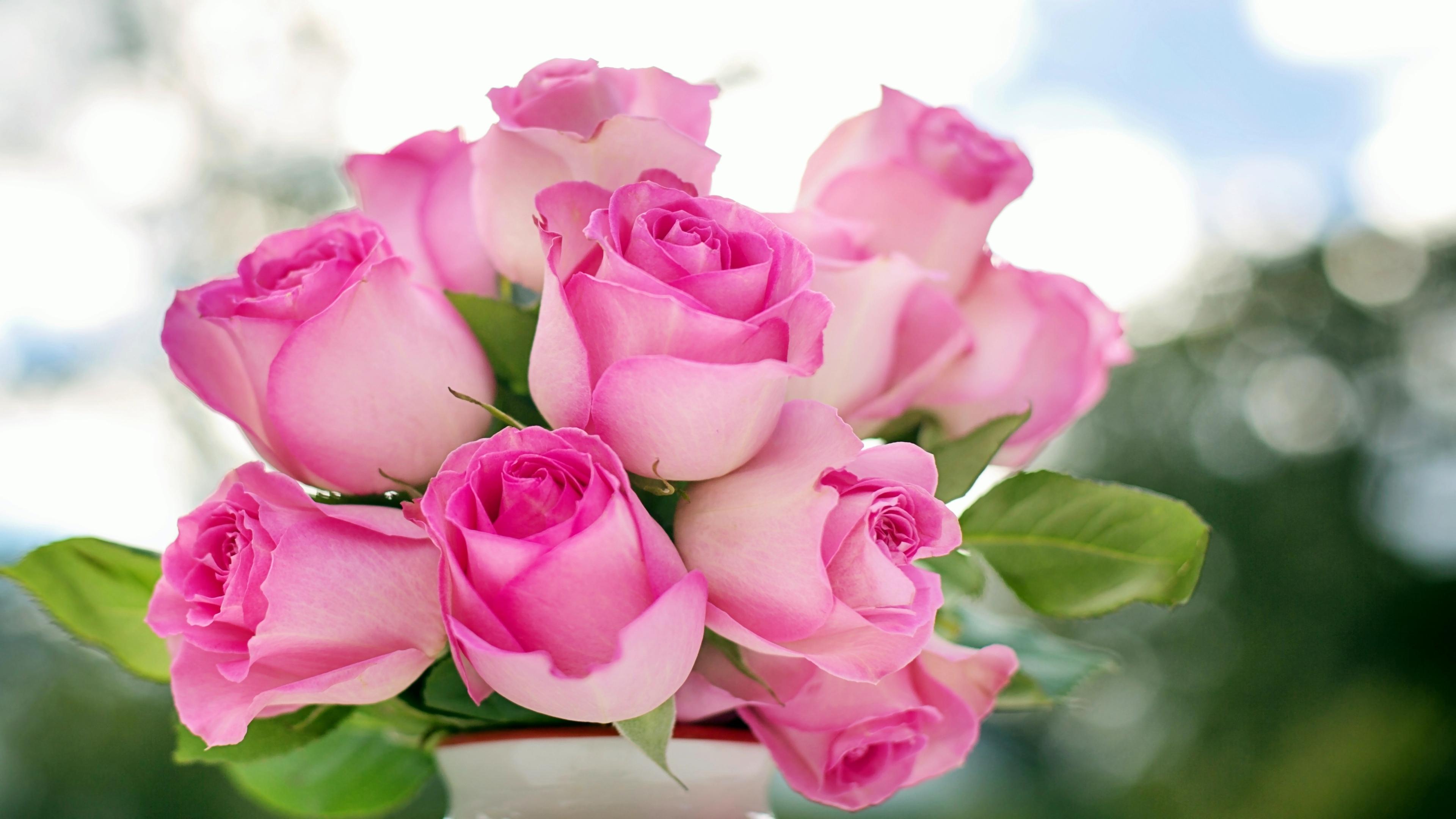 Hintergrundbilder Rosen Pink