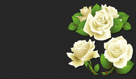 Rosen hintergrundbilder weiße Die 75+