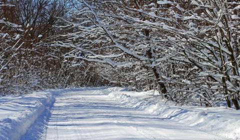 winterwald hintergrundbilder kostenlos