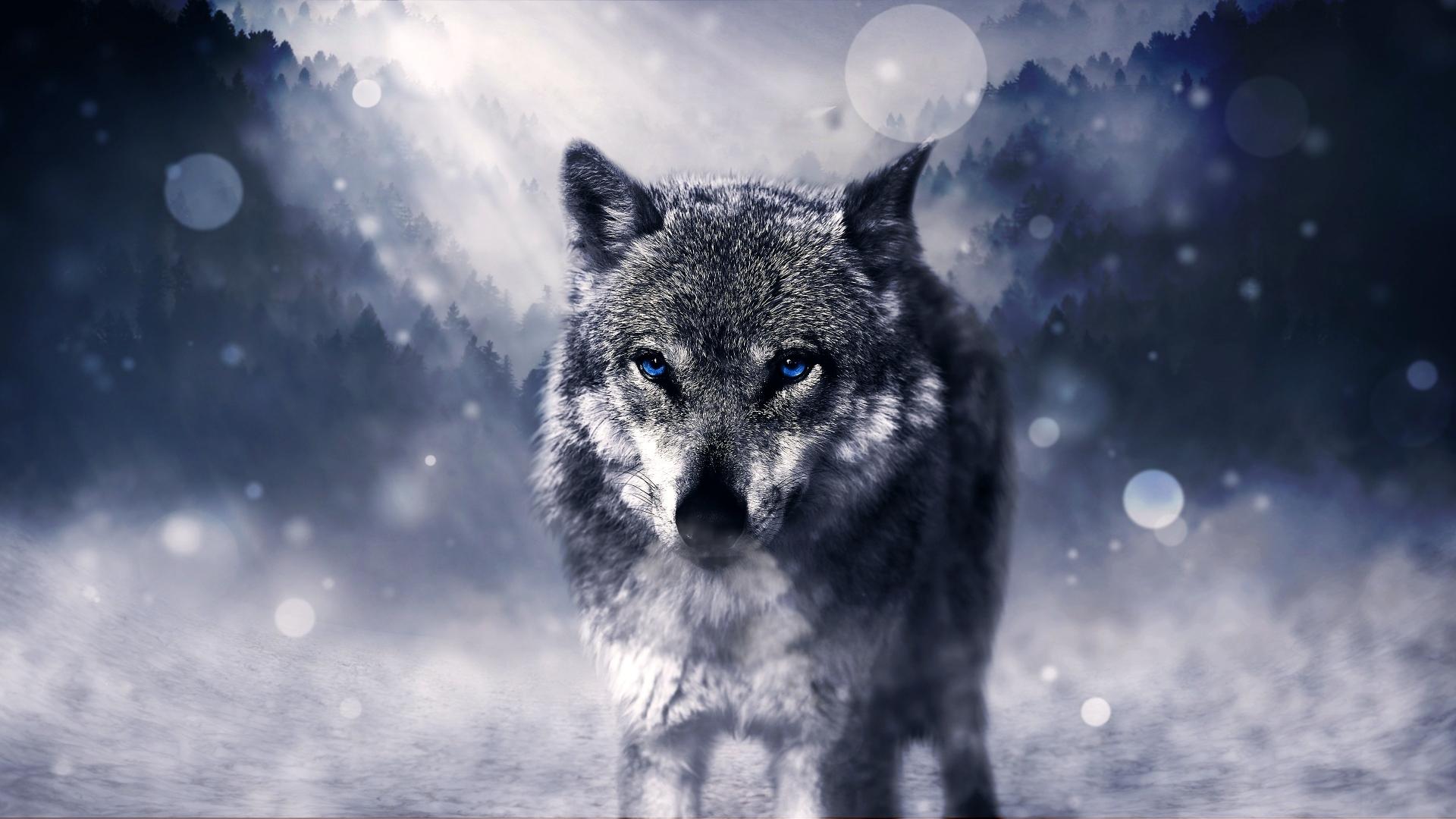 Desktop Hintergrund Tiere